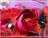 Arranjo de Rosas M�dio