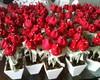 vaso de tulipas enfeite de mesa