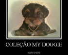 COLE��O MY DOGGIE - YORKSHIRE