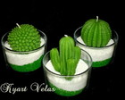 TRIO DE CACTUS NO VIDRO