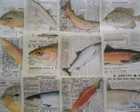 Peixes Jornal