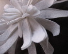 Broche dahlia branca
