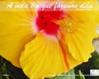 Fundo de Tela - Hibisco