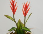 Heliconia Mini Permanente