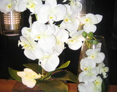 Duo de Orqudeas