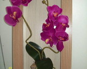 Quadro com Orqudea Dupla