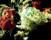 Fotografia Rosas Diversos Tamanhos