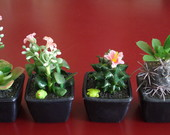 Cactos Artificial 4 Pe�as