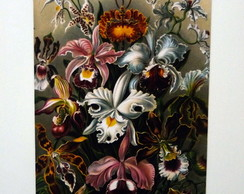 Im�s decorativos - Haeckel 06