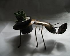 DC=104=formiga sup:cactos pequenos