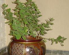 Cachepot em ceramica reciclado