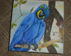 Arara azul(cole��o animais do Brasil)