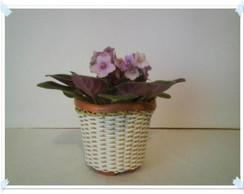 Vaso mini para violetas