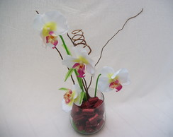 Arranjo orqu�dea borboleta