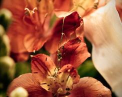 Fotografia Flores Diversos Tamanhos