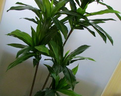 Arranjo Dracena Artificial I
