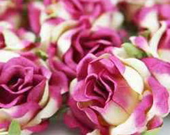 Dream Rose Cream Fusch - 1 Flor