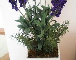 Flor de alfazema