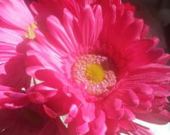 Arranjo de flores: G�rberas