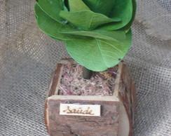 �rvore folhas moeda pequena