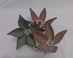 Flor de casca de canoinha