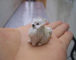 cachorrinho lulu da Pomeranea