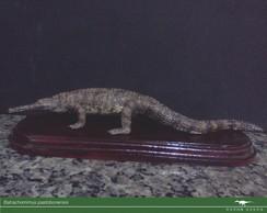 Cole��o Paleo Brasil - Batrachomimus