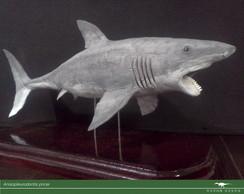 Cole��o Paleo Brasil - Anisopleurodontis