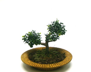 Bonsai Pi