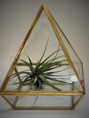 Kit (DIY) Air Plant Pirâmide (P18)