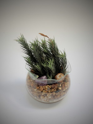 Mini arranjo Air Plants P30