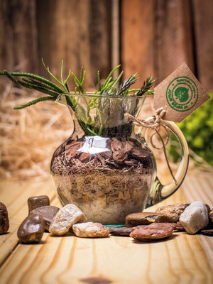 Arranjo Jarra com Air plants (P84)