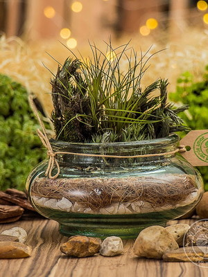 Arranjo com air plant (tillandsia) P192