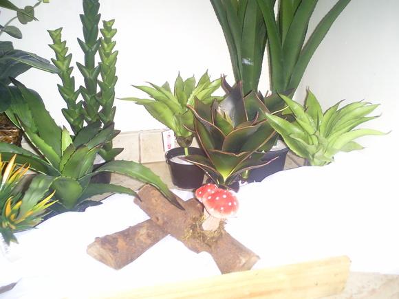 Jardim de cactos  Arte Flores Plantas Permanentes  Elo7
