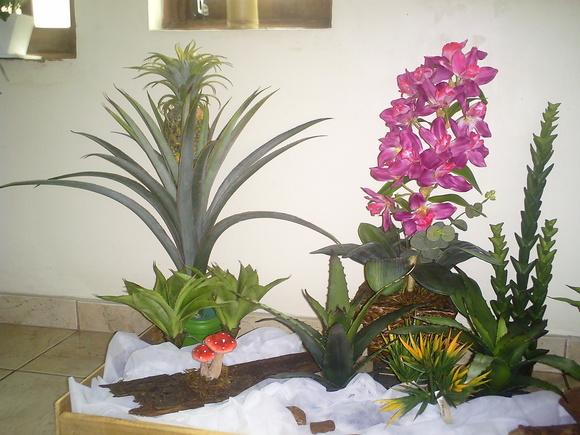 580 x 435 jpeg 109kB, Jardim de cactos Arte Flores Plantas Permanentes