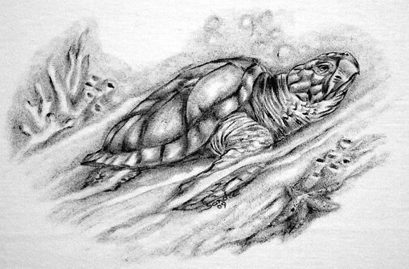 Tartaruga Marinha :: S�rie Tatoo