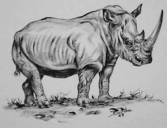 Rinoceronte :: S�rie Tatoo