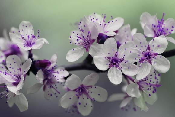 decoracao de sala lilas:painel-orquideas-lilas-decoracao-decoracao-de-sala