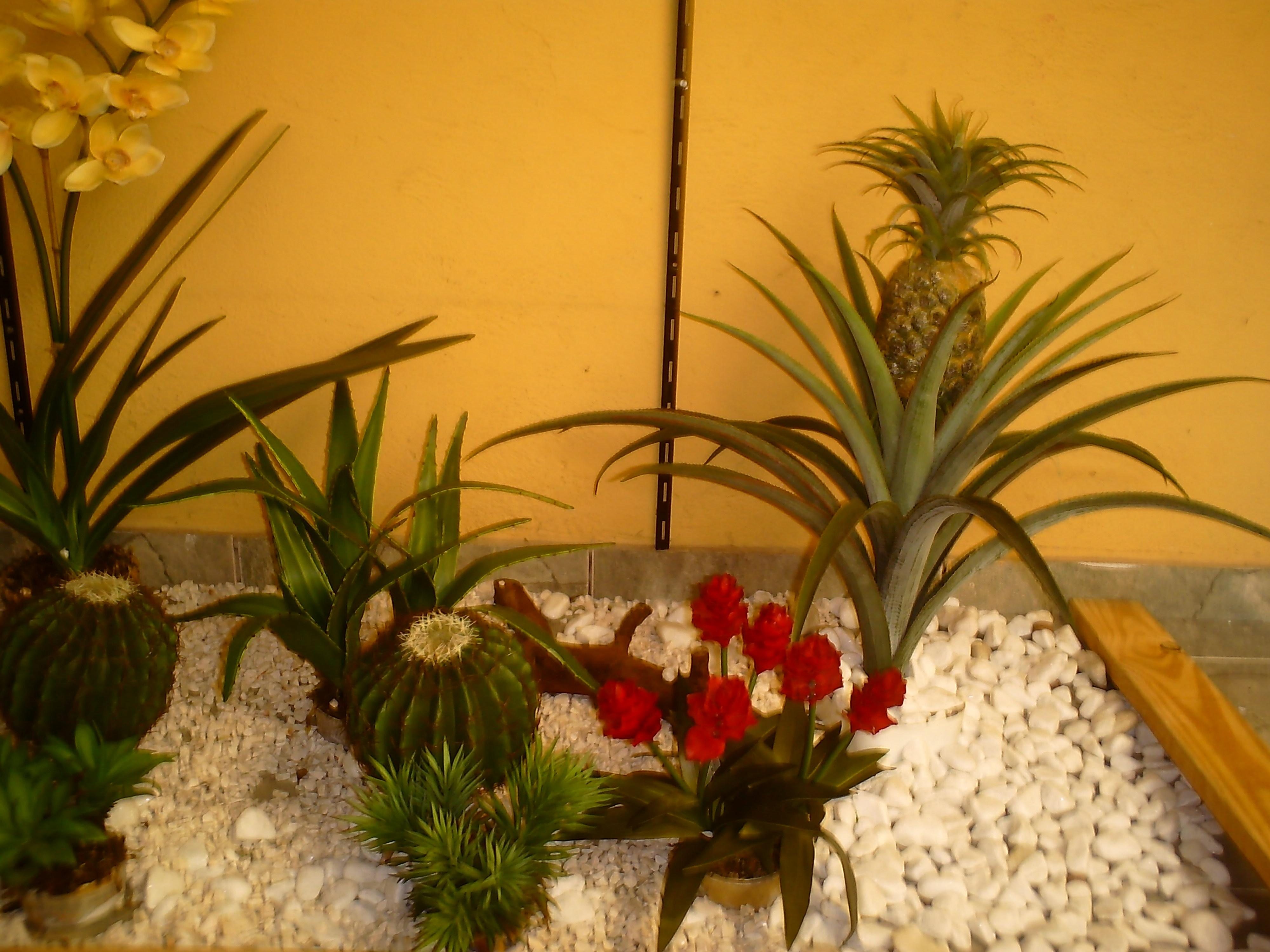 flores para jardim de inverno:jpeg 1326kB, Jardim de cactos e bromelias naiara plantas jardim de