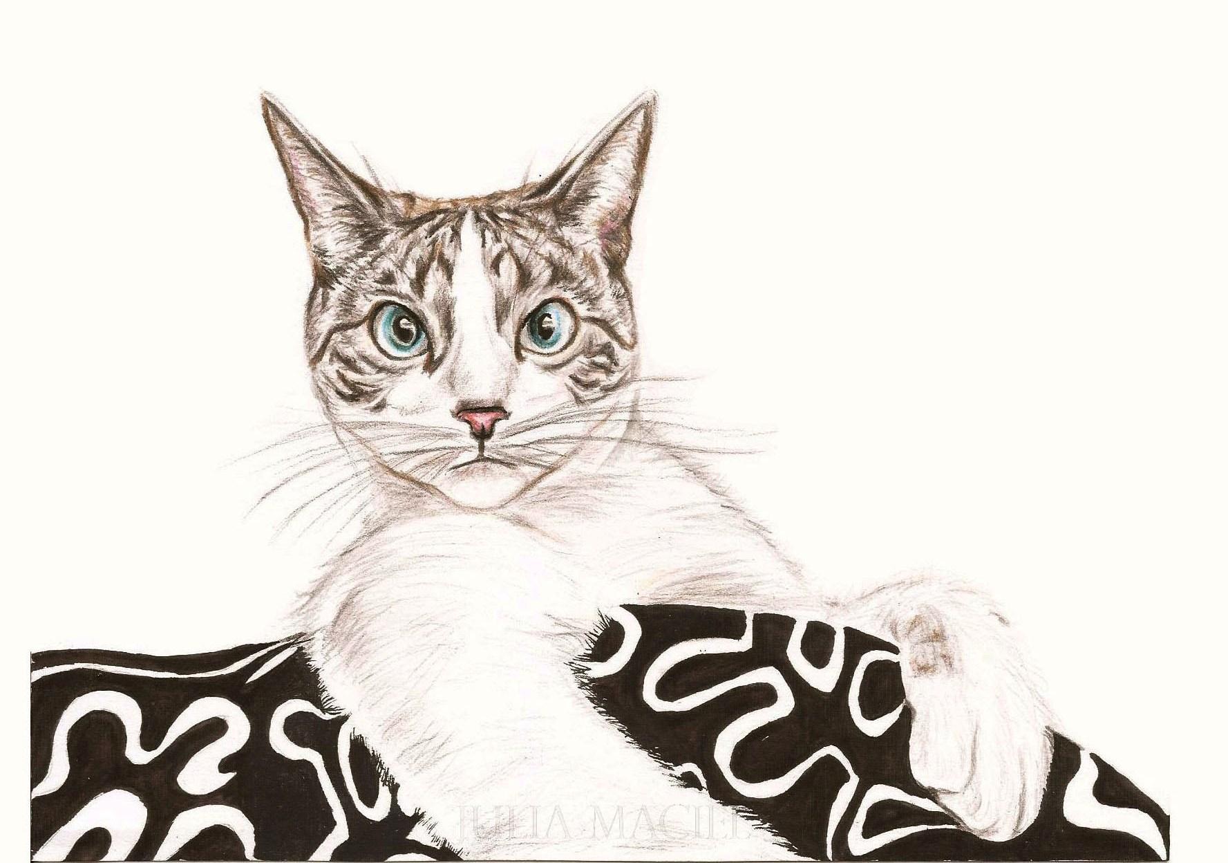 Desenho Gato - A4 Personalizado   Julia Maciel   Elo7