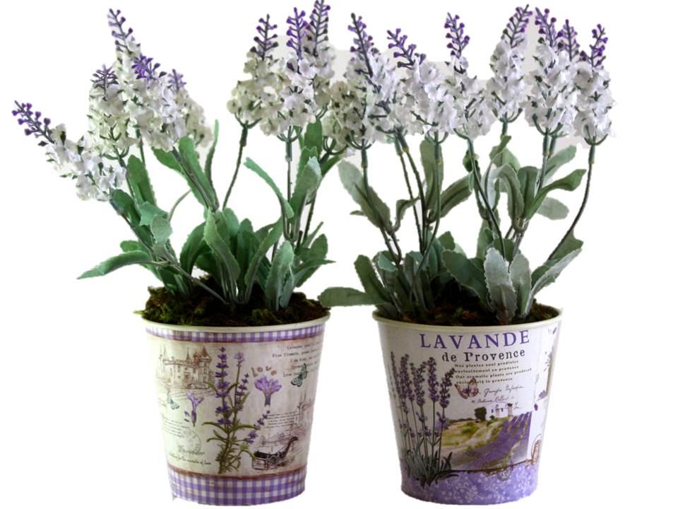 Duo de lavanda vaso provence eu que decoro elo7 for Lavanda coltivazione in vaso