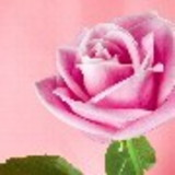 rosana naponiello de souza moreira silva