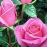 Marli rosa Lima