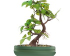 Bonsai Artificial Verde 03