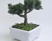 ARRANJOS DE BONSAI