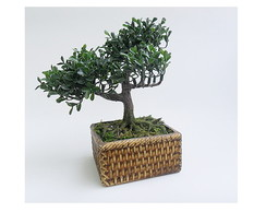 ARRANJO BONSAI - 05