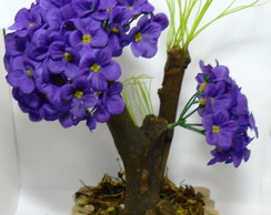 Bonsai Violeta