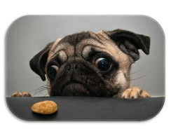 Tapete Decorativo Pug TPani006B