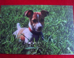 Placa Decorativa Dog 1mm