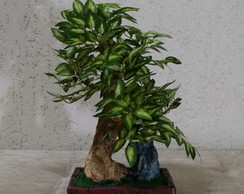 Bonsai Luxo